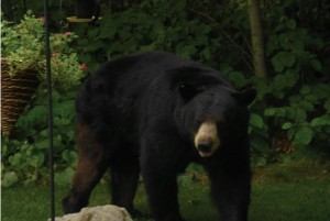 s Bear 2